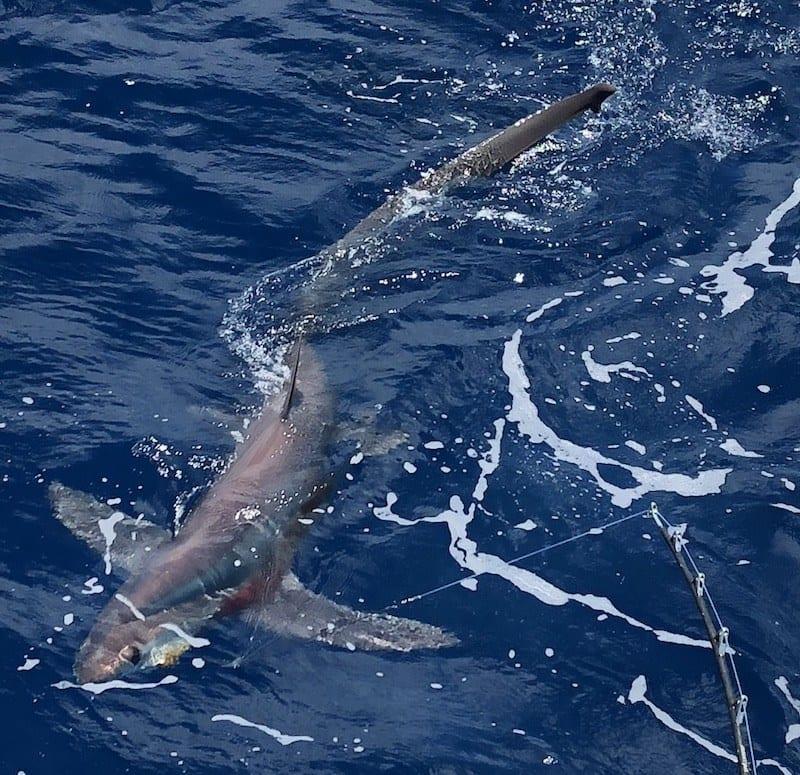 shark-fishing-2